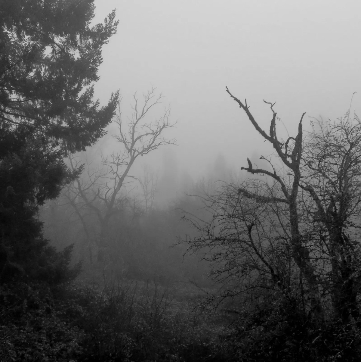 Moody Morn