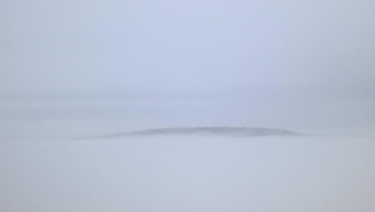 Dixie Fog