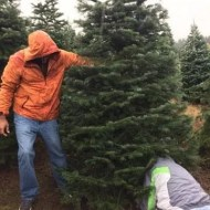 Cutting the tree