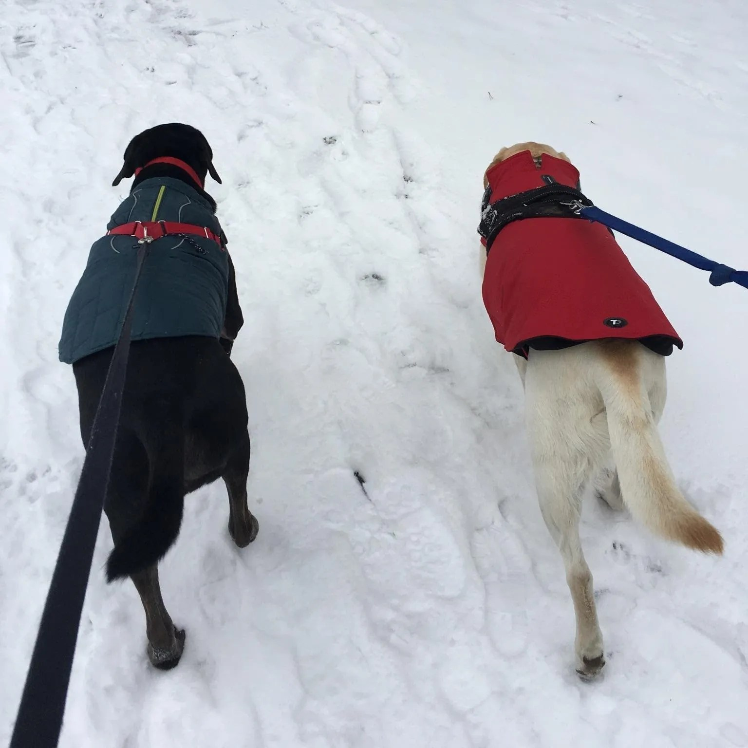 Ollie and Gilly walk the paths of Liberty Park