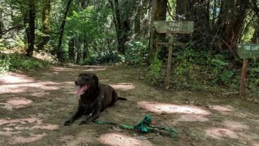 Mousse on the Ridge Trail