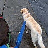 Mousse and Gilligan on a walk