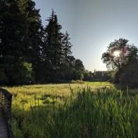 Meadow in Rock Creek Trail Park