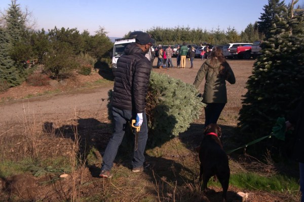 Kevin and Ashley haul their tree