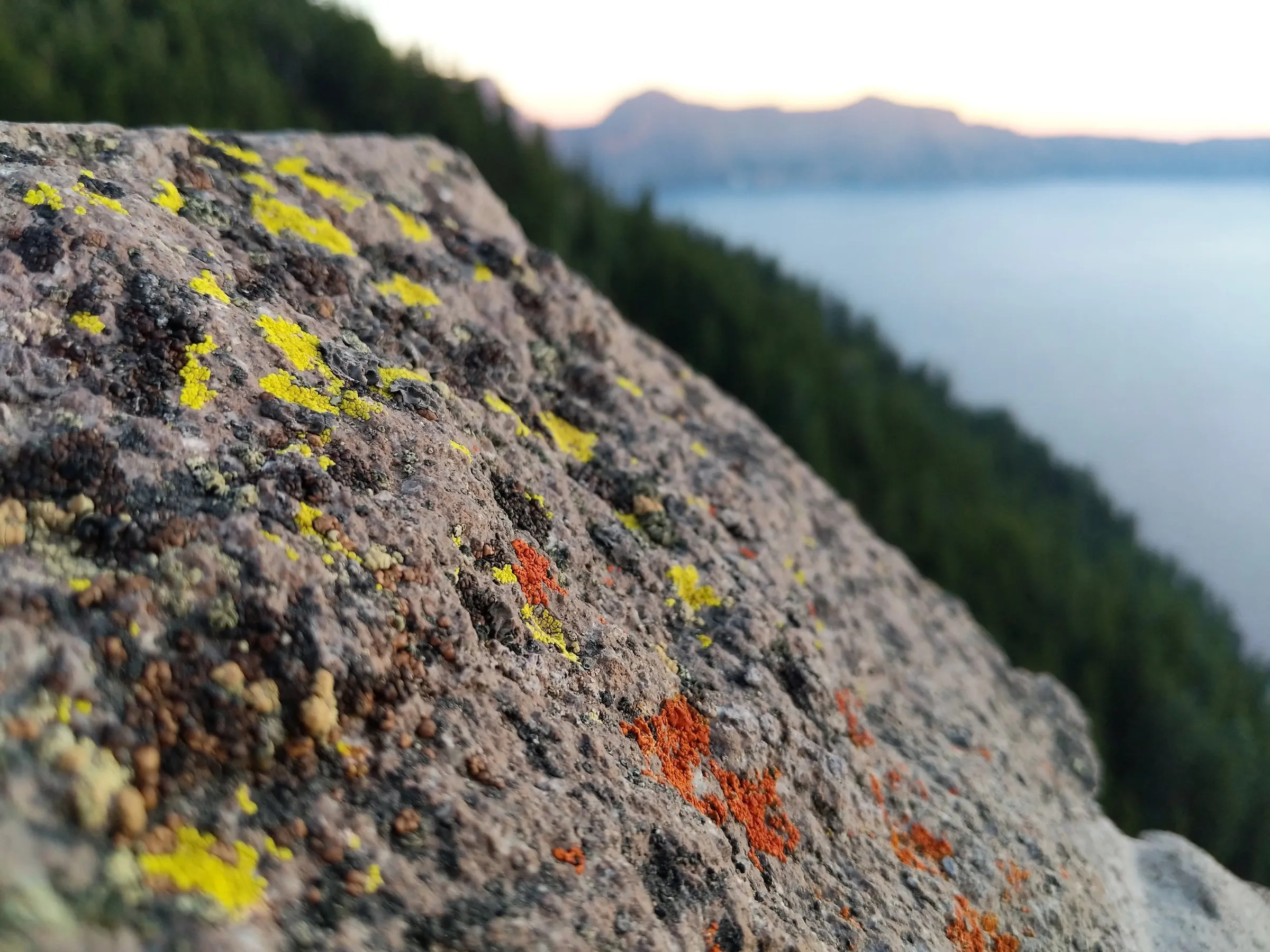 Lichen on Crater Lake's rim