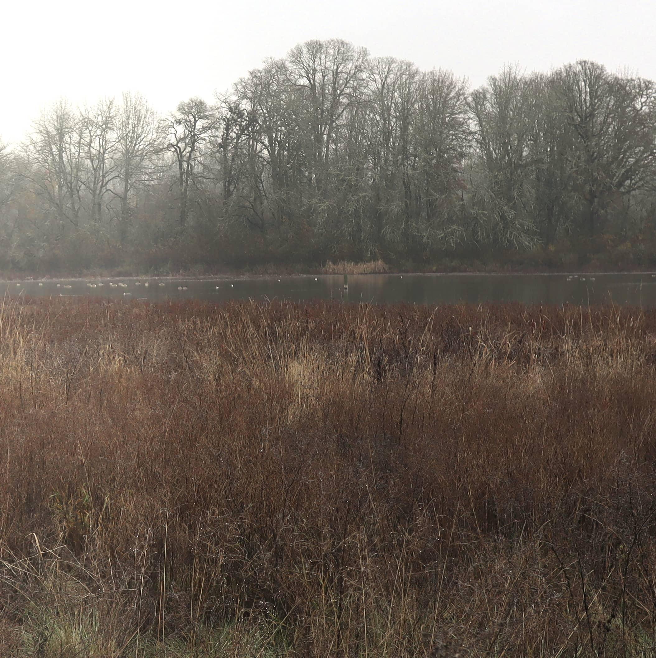 Oak Island Marsh