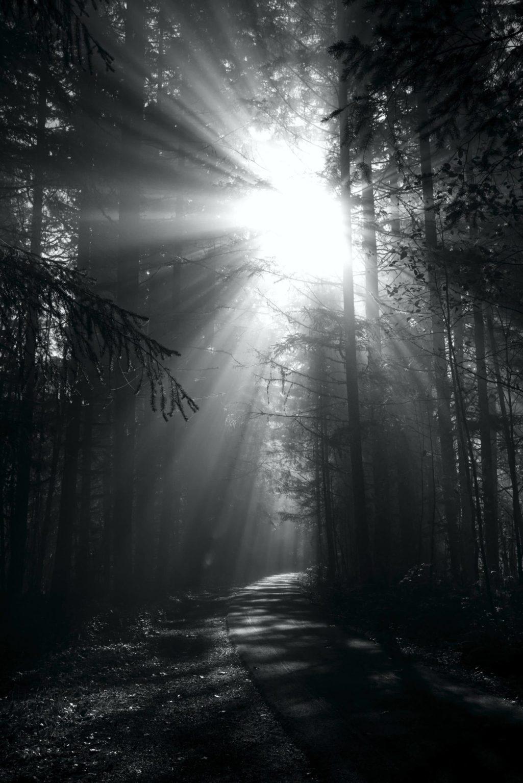 The sun blasts through the morning fog