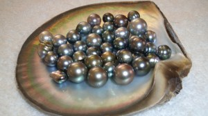 Assorted Black Tahitian Pearls in shell