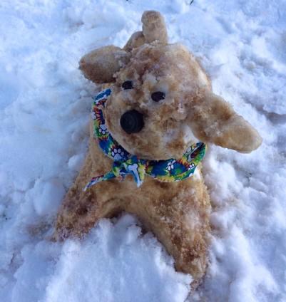 soy snow dog