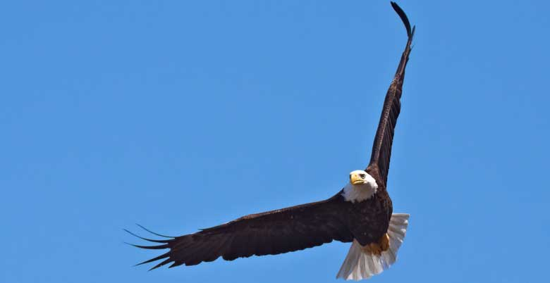 It's Time to Soar! What Keeps Us from Really Taking Off?