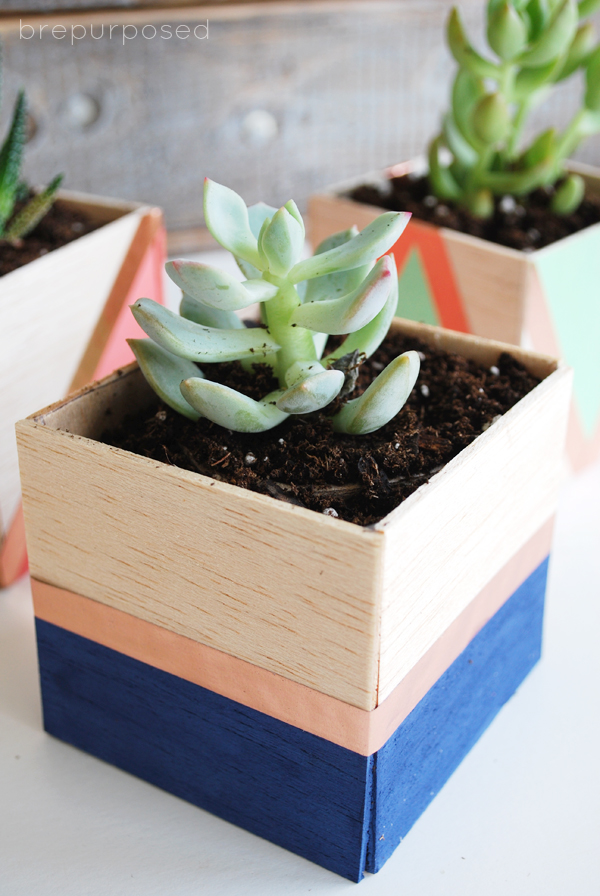 a mini succulent planter with color blocking
