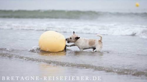 Ferien mit Hund am Meer