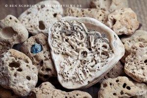 Nature Art Seashell