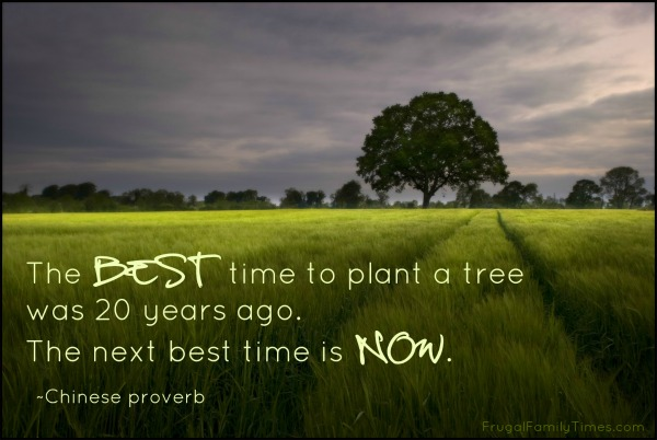 chinese proverb tree