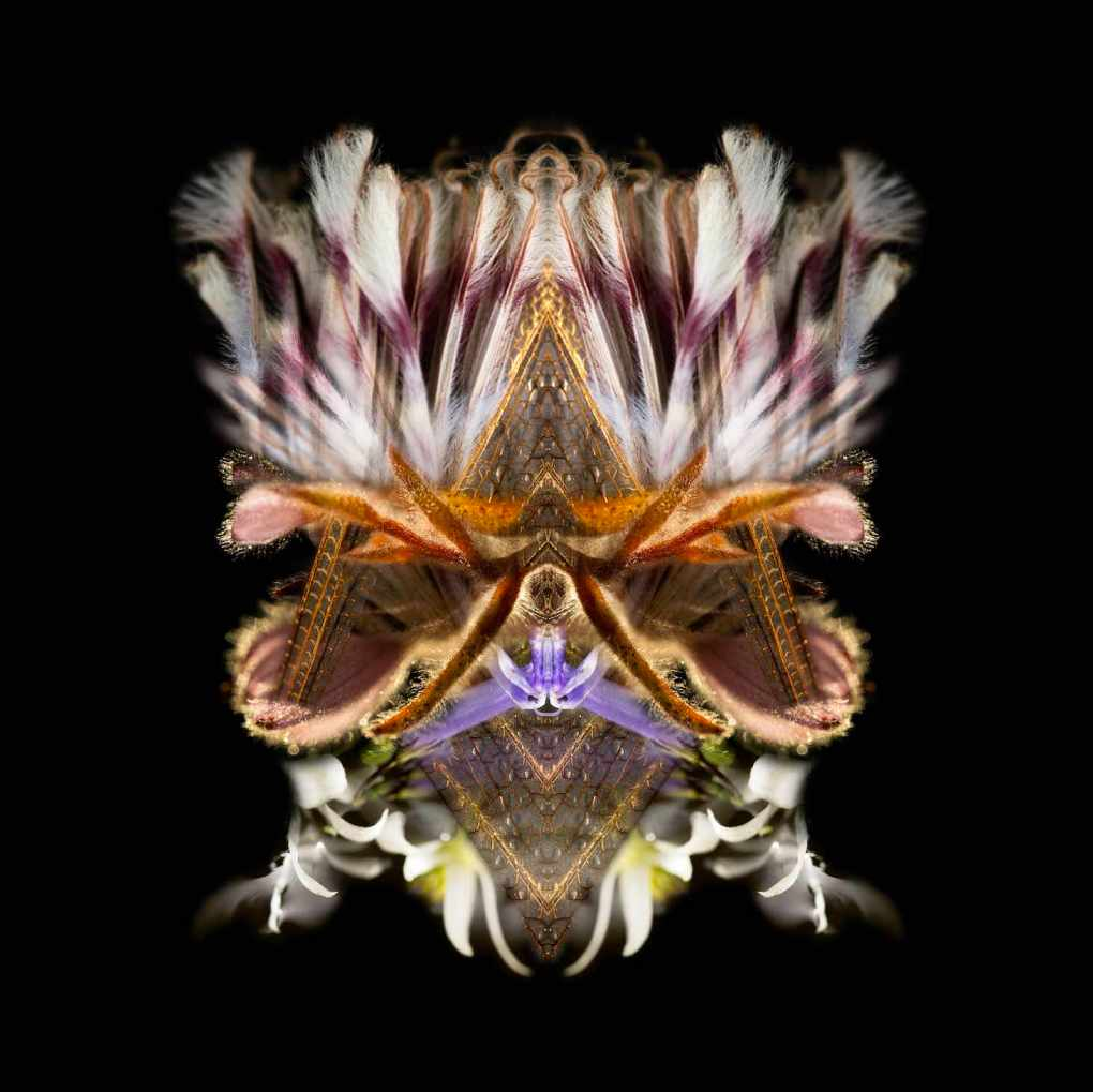 Oliver Barnett Abstract Fine Art Photography, Abstract Nature Photographer, Fine art photography for Sale, Brett Gallery, Art for Home, Corporate Art, Large Format Photography, Colourful Abstract Photography