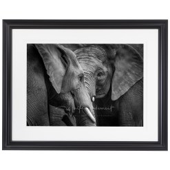Wolf Ademeit Animal Black and White Fine Art Photography Portrait Zoo Animals Photographer Fine art photography for sale, Brett Gallery, art for home, corporate art, large format photography, Wildlife photography Elephant