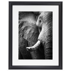 Ross Couper Animal Black and White Fine Art Photography, Wildlife Photographer, Fine art photography for Sale, Brett Gallery, Art for Home, Corporate Art, Large Format Photography, Wildlife Photography, Art Gallery, Elephant