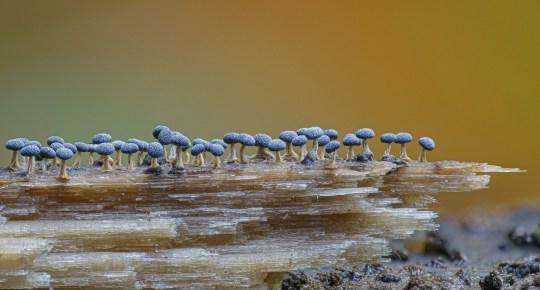https://www.instagram.com/marin_mushrooms/