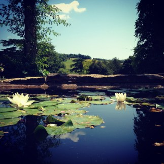 Floating lilies and the gentle roll of the Sussex landscape beyond