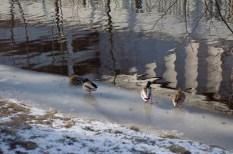 Kalte Ente(n)