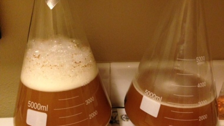 Two flasks of yeast starter solutions for brewing beer.
