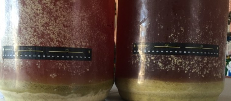 Two fermentation vessels using the dry hopping method of brewing beer.