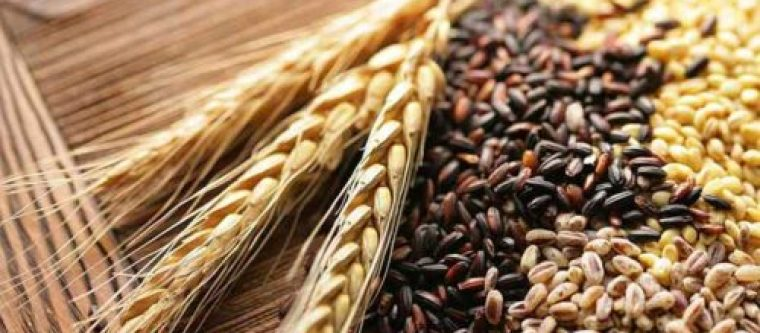 Different types of grains with wheat plants.