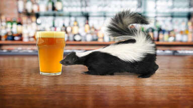 A glass of beer and a skunk on a table.