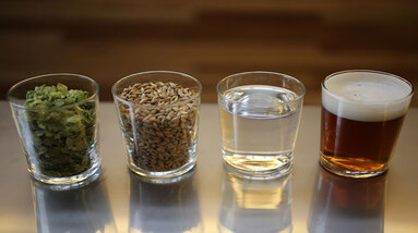 Four glasses with basic beer ingredients, water, hops, grains and yeast
