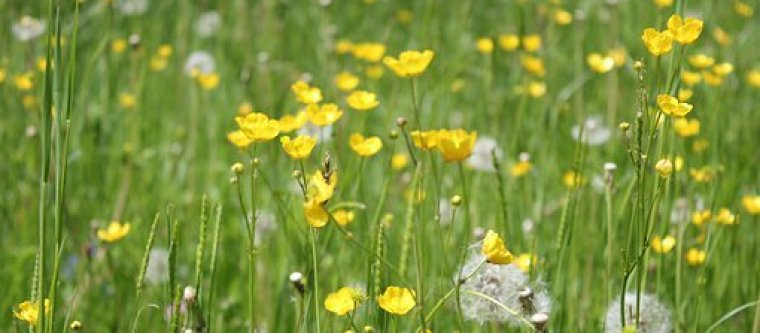 A field filled with grass and marigold flowers and bugs.
