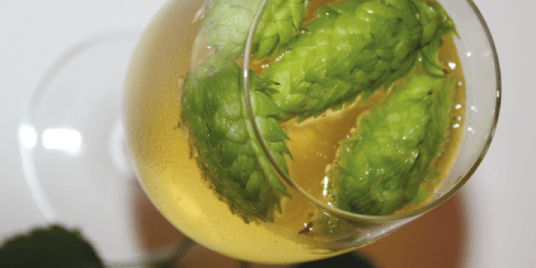 A glass of cider with 4 hops flowers floating in it.