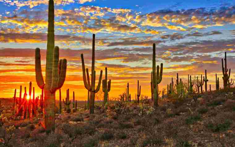 A sunset in the Arizona desert with a view of stunning orange skies and field of cactus.
