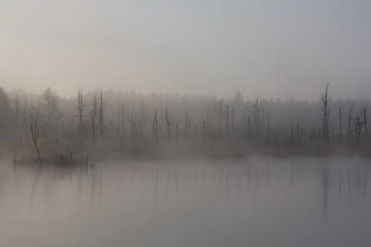 fog-1886939_1920