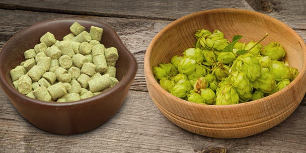 Bowls of pelletized hops and fresh hops on the table.