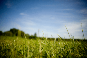 Organic Lawn Care, The Colony TX