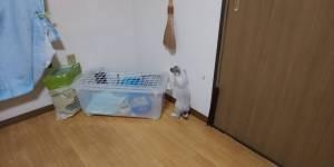 ウサギの部屋散歩とラットの外寝が重なった。