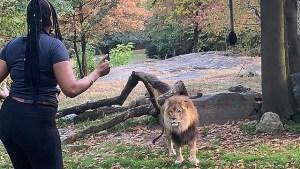 【米国】 ライオンの囲いに侵入してダンス  不法侵入容疑で女を逮捕! 動画アリ