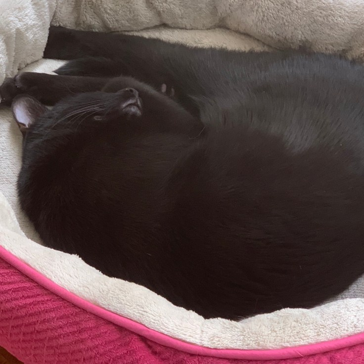 A photo of my most adorable youngest, Lucipurr, a sleek black cat, snoozing.
