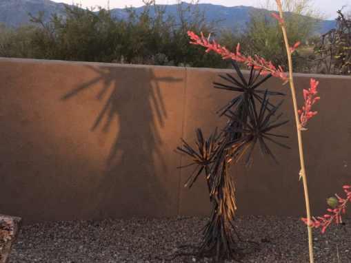 Soap Yucca Tree