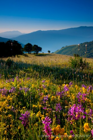 Wildflowers Umbria Italy Photography Workshop Tour