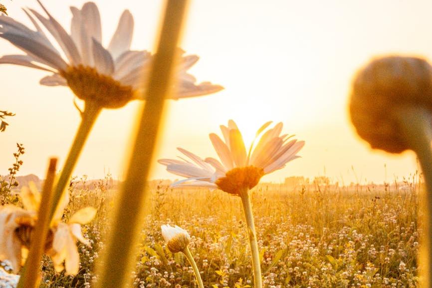 Garden sunshine