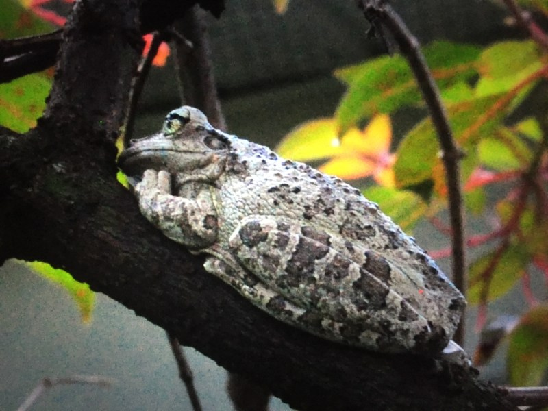 2016-09-11_20-47-19_frog_9342