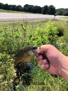 Drive Way Fishing Green Sun Fish