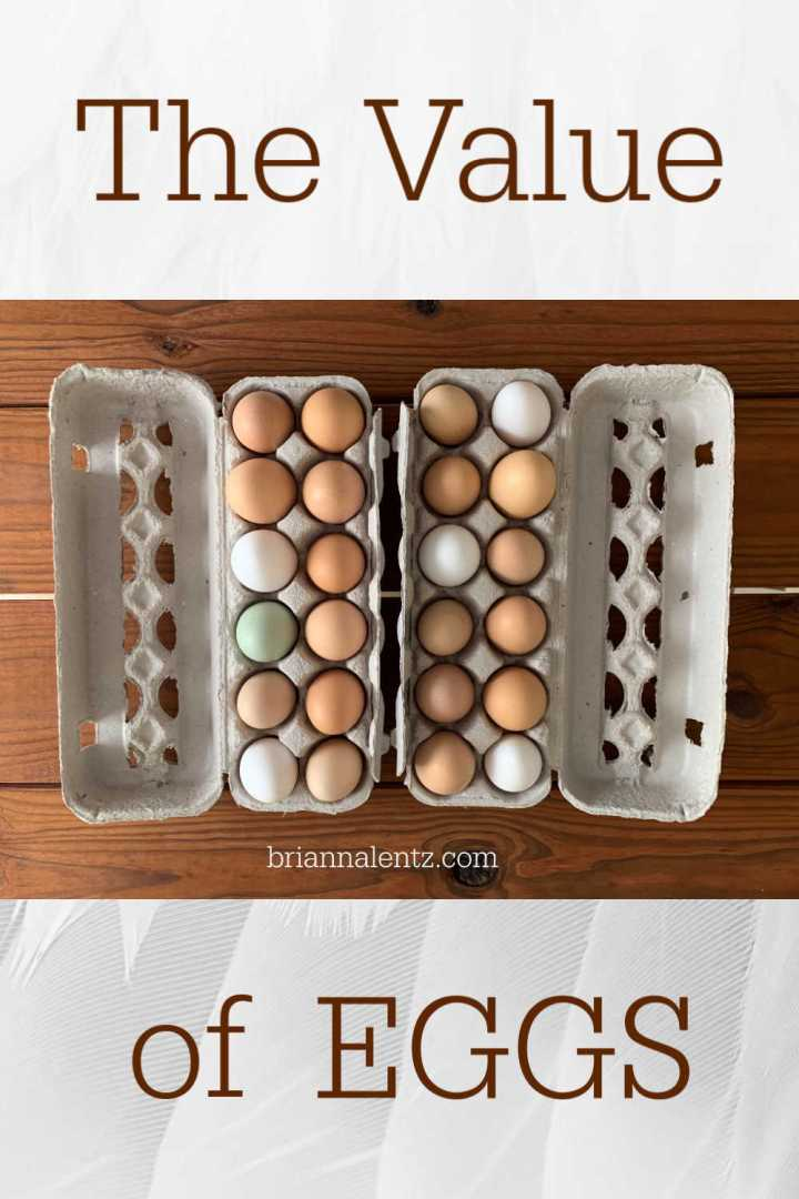 The Value of a Dozen Eggs