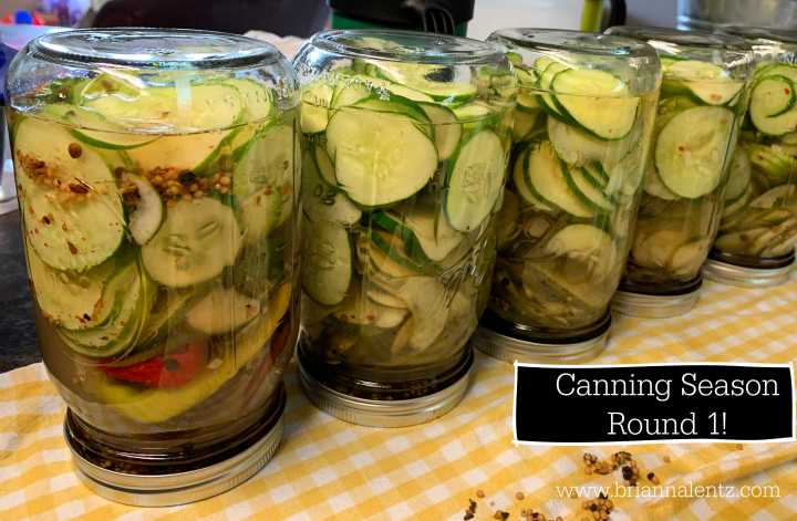 Canning Pickles With Cucumbers From Our Garden! A Bucket List Day!