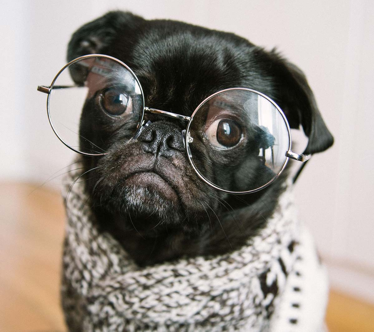Curious Dog with Glasses