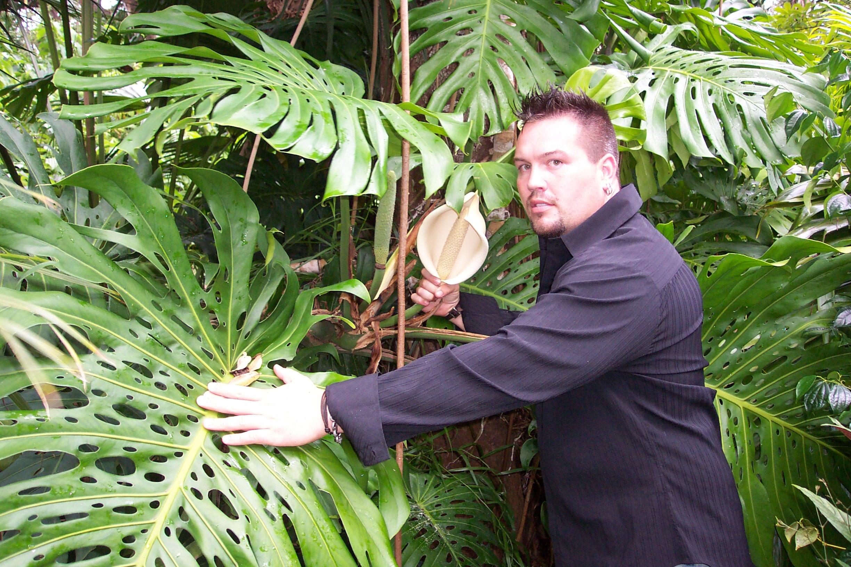 Monstera Deliciosa Brian S Botanicals