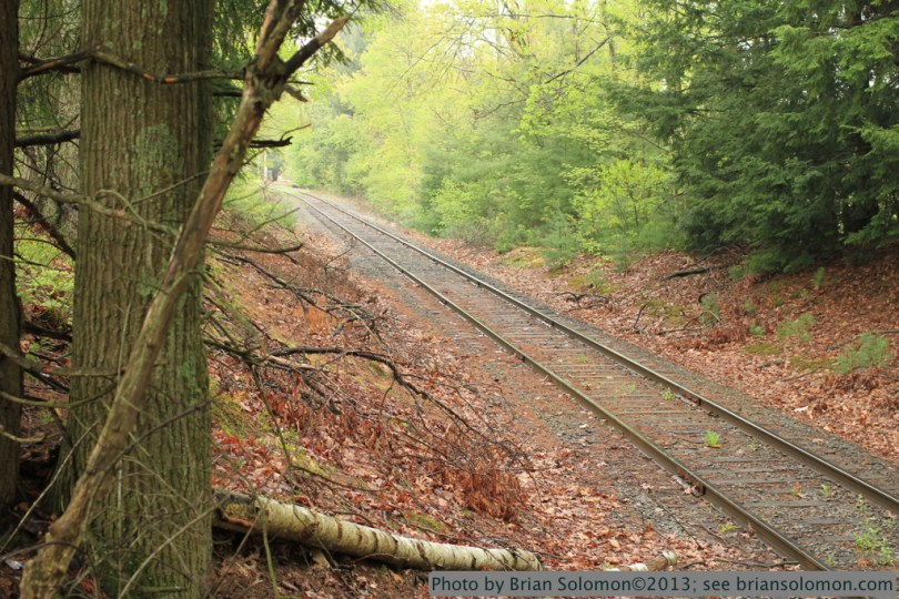 Tracks in forest.