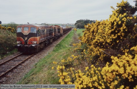 Blooming gorse with train.
