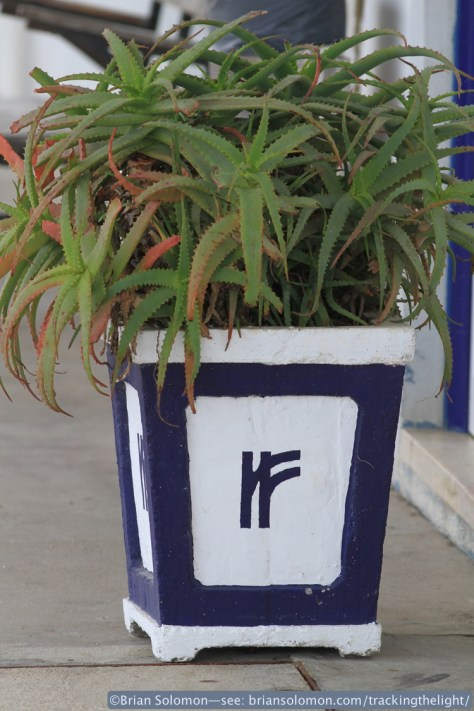 A potted plant displays the CP logo, which reminds me of the old Irish Rail logo, except in royal blue instead of orange. Canon EOS 7D with 100mm lens.